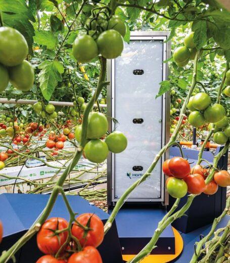 hortikey_robot_achter_tomaten